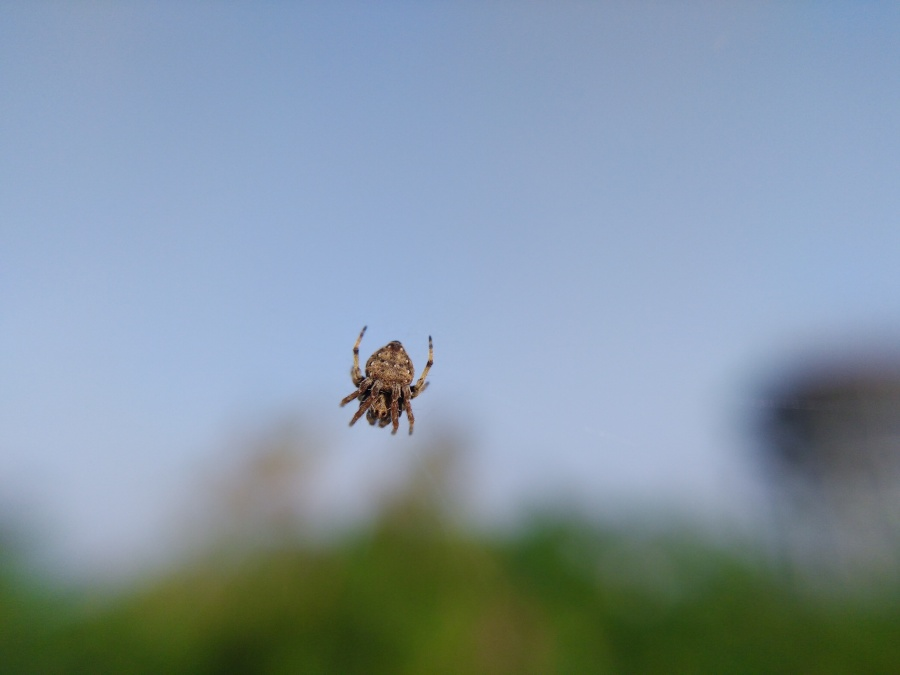 floating_spider_natures_beauty
