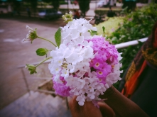 natural-combinations-pinkwhite-flowers