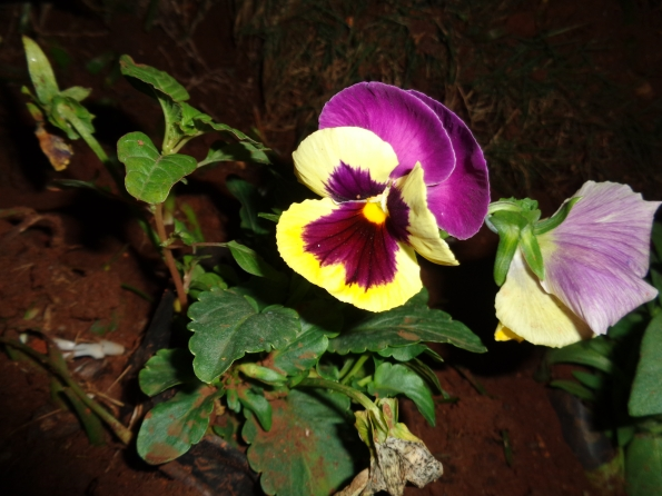 pinkflower2_naturesbeauty
