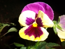 pinky_flower_naturesbeauty