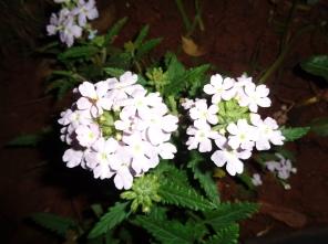 white_flower_naturesbeauty